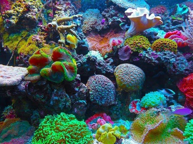 Interaccion corales acuaticos